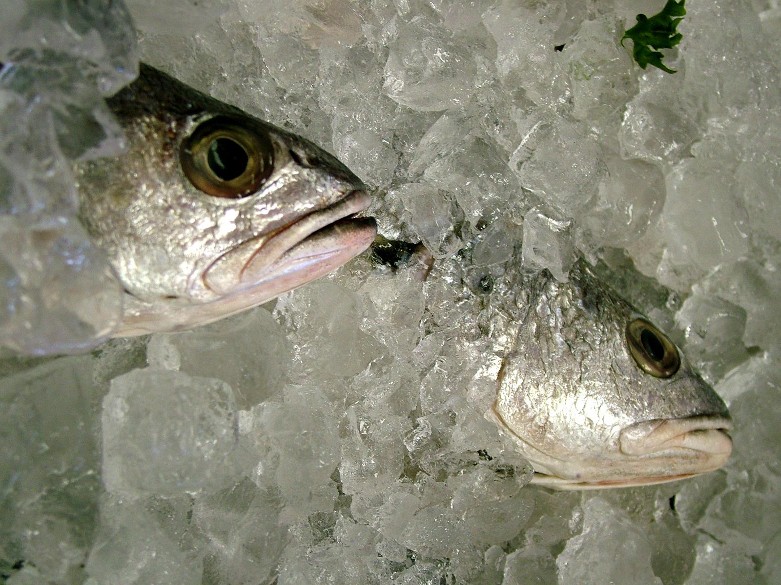 congelado_pescado