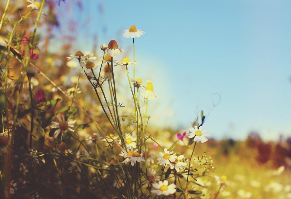 meadow-845469_1920