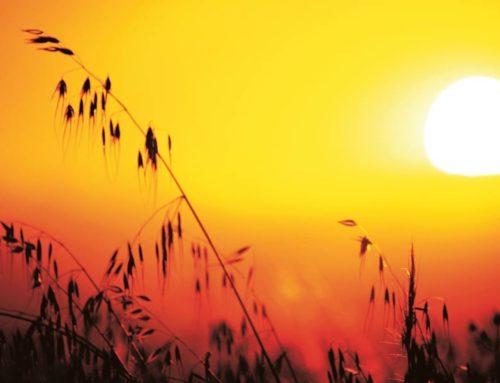 Recomendaciones para la ola de calor