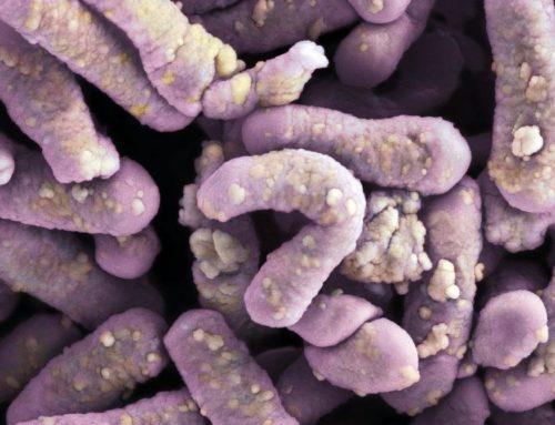 Microbiota, disbiosis y enfermedades